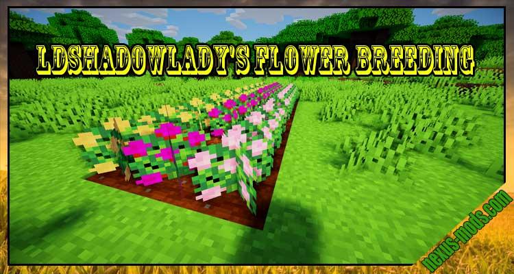 LDShadowLady's Flower Breeding